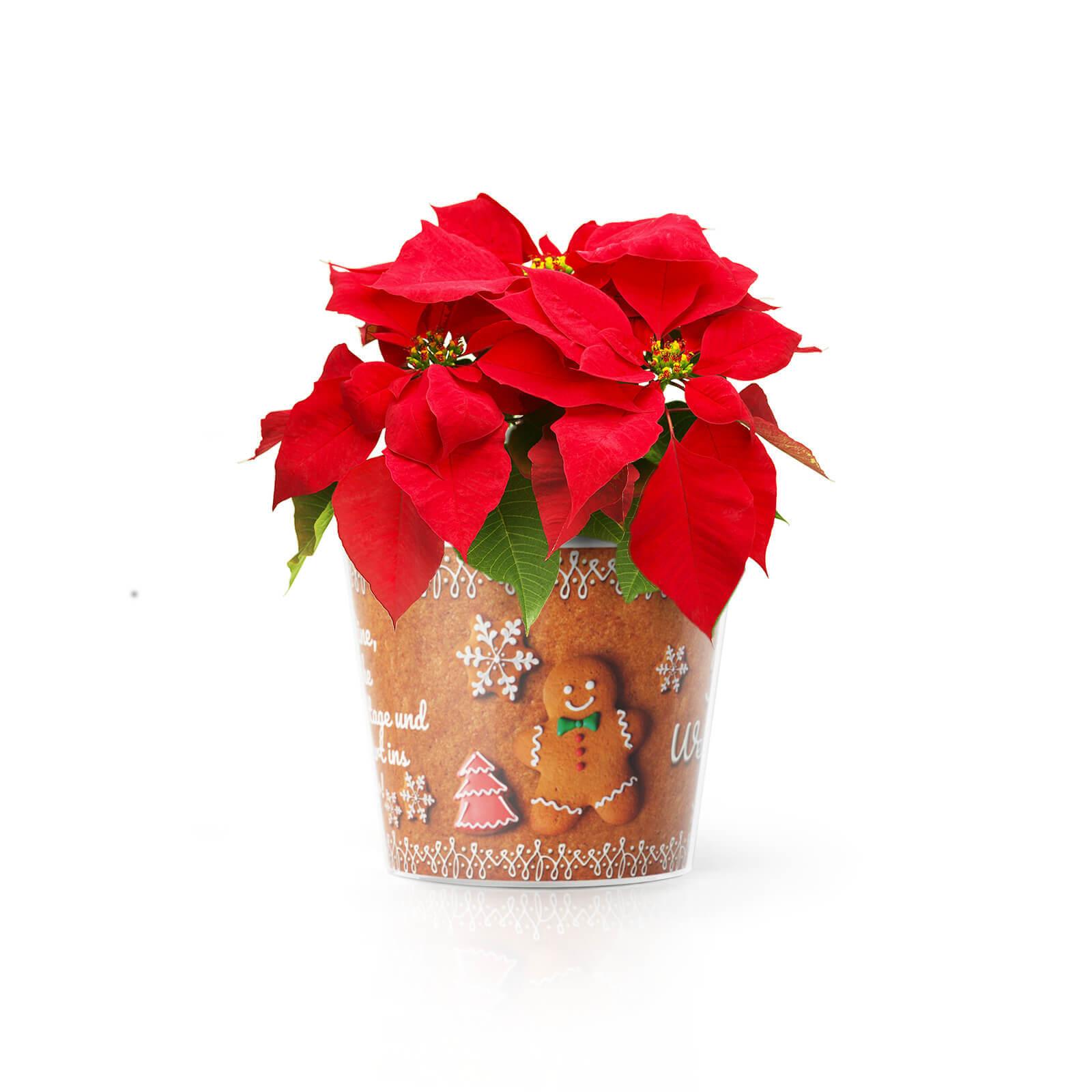 Cookie Weihnachtswuensche Oma und Opa Weihnachtsgeschenk