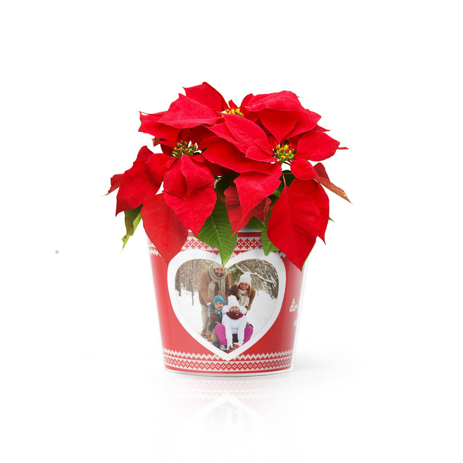 Weihnachtsgrüsse Blumentopf