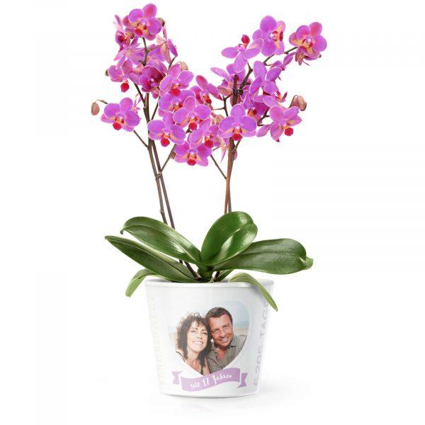 17. Hochzeitstag - Orchidee