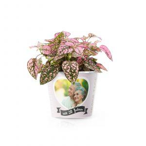 30 Hochzeitstag Perlenhochzeit Blumentopf Von Myfacepot